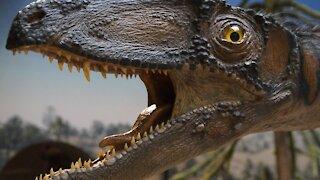What Really Killed The Dinosaurs ?  dinosaur documentary 