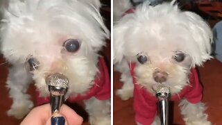 Special needs dog hilariously sniffs mini microphone