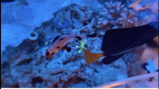 The reef dwellers