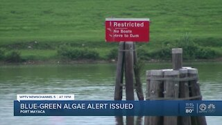 Lake Okeechobee toxin levels measure 16 times higher than what DEP recommends