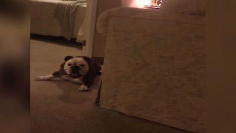 Adorable Dog Chases Perfume