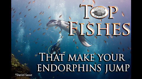 Top Fishes that make your Endorphins jump!