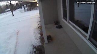 Puma invade varanda de casa nos Estados Unidos