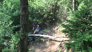 Ciclista sbatte contro un albero e lo spezza