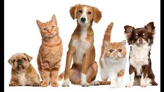 EXPLORING PETSMART ! ANIMAL FRIENDS EVERYWHERE! Parte 1 e única.