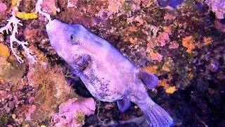 Ocean creatures eat beneath the waves