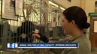 Naples animal shelter lowers adoption rates
