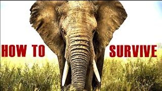 How To Survive A Elephant Attack