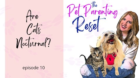 Are cats nocturnal? My cat is waking me up at night! | The Pet Parenting Reset, episode 10