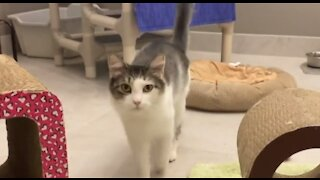 Sunrise Humane Society overflowing with adoptable pets