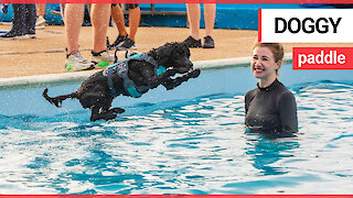 Dogs and their owners splash around together in open-air swimming pool