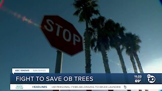 Residents fight to save palm trees in Ocean Beach