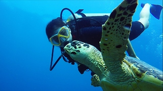 This Young Diver Has A Gift For Connecting With Sea Turtles