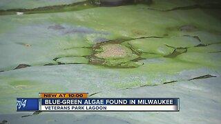 Blue-green algae found in Milwaukee