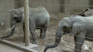 Omaha's Henry Doorly Zoo expecting baby elephant in 2022