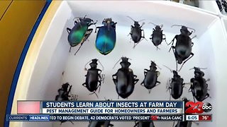 Students learn about insects at Farm Day in the City