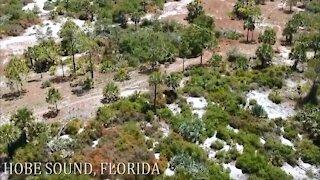 Hobe Sound, Florida Drone Footage