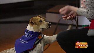 A Unique Dog Fostering Program at Carroll University