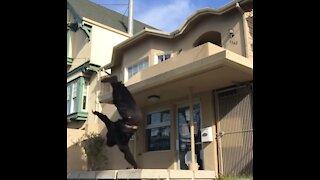 Guy Attempting Skateboard Trick Falls Off Balcony