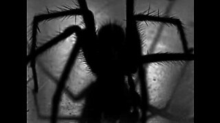 Man wakes up with giant spider on his bed