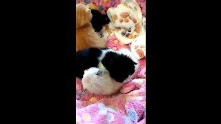 SUPER CUTE sleepy baby kittens
