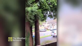 Strong winds blow debris down a suburban road