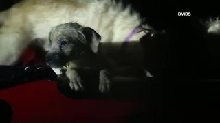 Puppies rescued from Hurricane Florence's flood waters