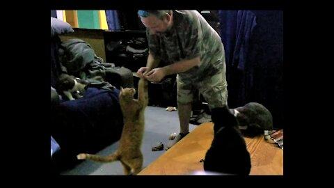 My cats love their jerky treats.😻🐈 うちの猫はジャーキーのおやつが大好きです😻🐈。 https://www.bensound.com