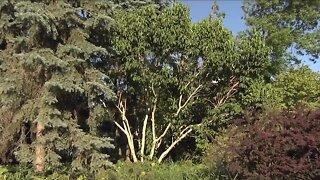 Melinda's Garden Moment - Uncommon trees