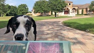 Great Dane proudly delivers the Tampa Times newspaper