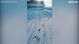 Ce maître sauve son chien des eaux glaciales