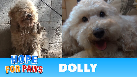 A severely matted poodle gets rescued and then makes a transformation of a lifetime!