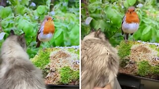 Cat watches wildlife documentary, tries to catch bird on screen