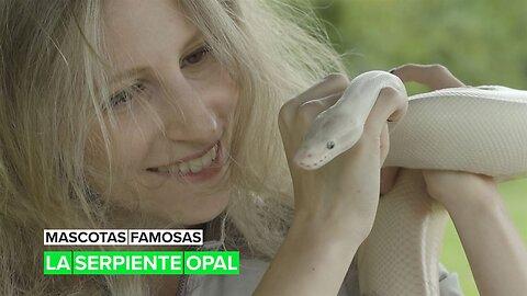 Mascotas famosas: La serpiente Opal