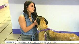 Pet of the Week: Maleficent at GCHS