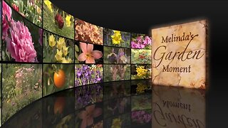 Melinda's Garden Moment – Plant Hardiness Zones