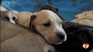 10 Cute Puppies Find Forever Homes