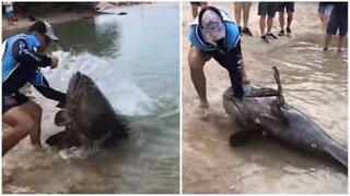 Australske fiskere fanget en KJEMPE-grouper