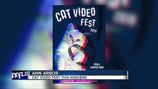 Cat Video Fest coming to Detroit this weekend