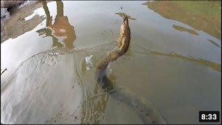Fish hunting Big bam fish catching