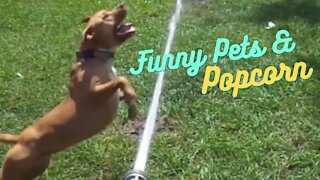 These Pets are awesome ❤ Funny Amazing Video
