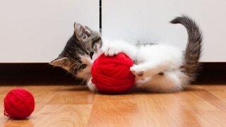 Funniest Cat 😹