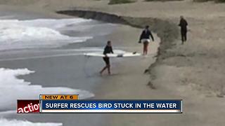 Determined surfer saves pigeon from drowning on Venice Beach