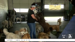 Community helping Omaha doggy daycare keep doors open