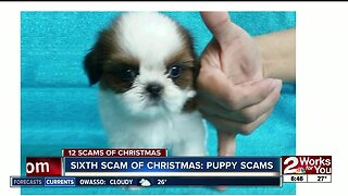Sixth Scam of Christmas: Puppy Scams