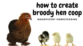 How to Create a Coop for a Broody Hen