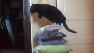 Gata adora saltar sobre tudo!