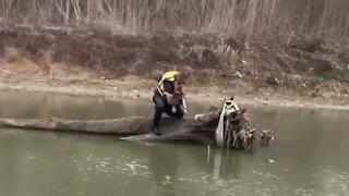 Firefighter rescues dog stranded on fallen tree