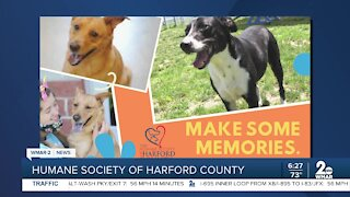 Chance and Sandy the dogs are up for adoption at the Humane Society of Harford County