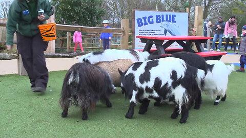 Annual Stocktake Begins at Zoo